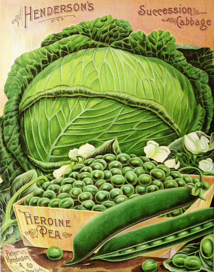 Cabbage, Peas and Beans page from - Peter Henderson Co. catalogue, c.1895