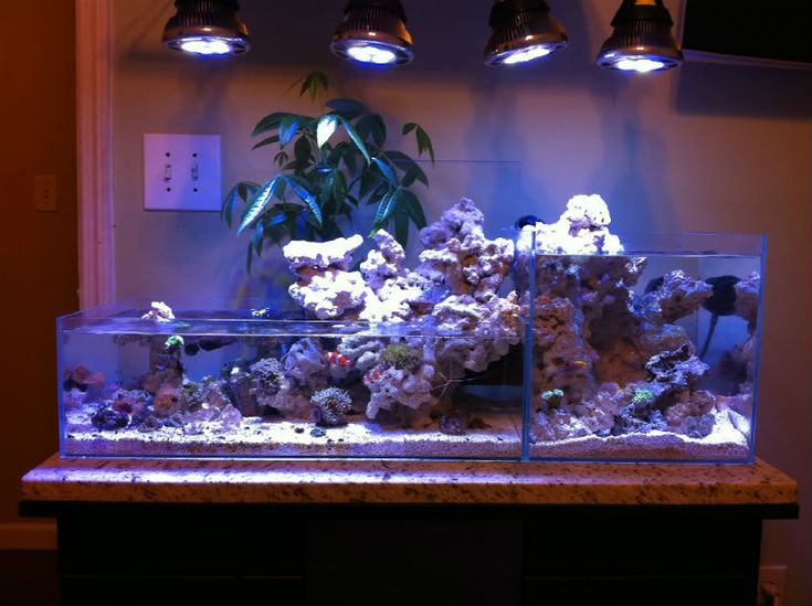 Jonny 39 s nano ada waterfall tank reef tank aquarium for Ada fish tank
