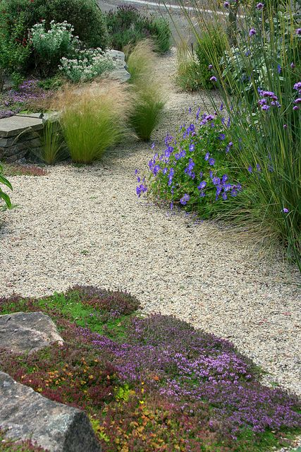 Ideas to soften the edges of my gravel garden.  Note grass planted out into the gravel.