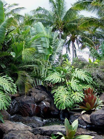 Pretty, subtle water element with plantings...like the different heights and textures of the palms and palm plants among the rocks
