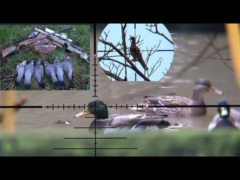 Airgun Hunting Duck,Dove & Pigeon Amazing Shots With Hunting Video Form ...