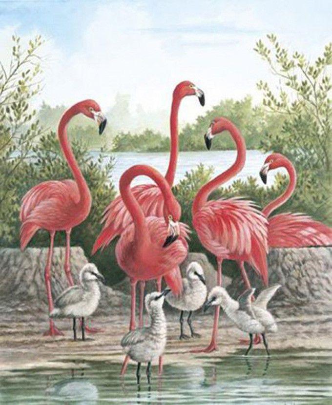 Best 25 Flamingo Bird Ideas On Pinterest Pink Animals