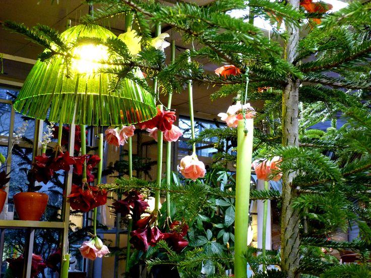 Wie ein Zauberwald : Weihnachtliche Dekos laden zum Träumen ein!