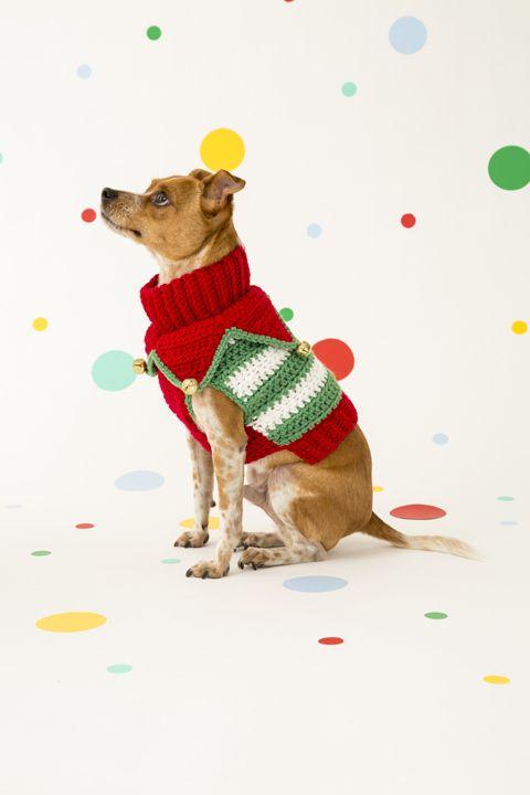 33 best Mascotas images on Pinterest | Mascotas, Ropa para perros y ...