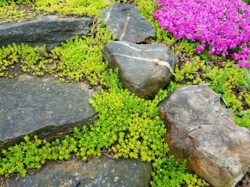 Sedums For Hardy Ground Cover by treasures4u2c