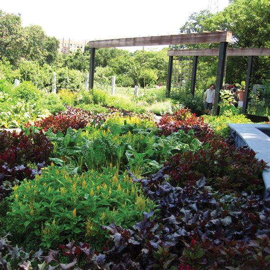 Design an edible garden that is beautiful, tasty and productive.