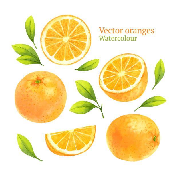 Orange Slice Doodle Watercolor Google Search Oranges Watercolor Orange Fruit