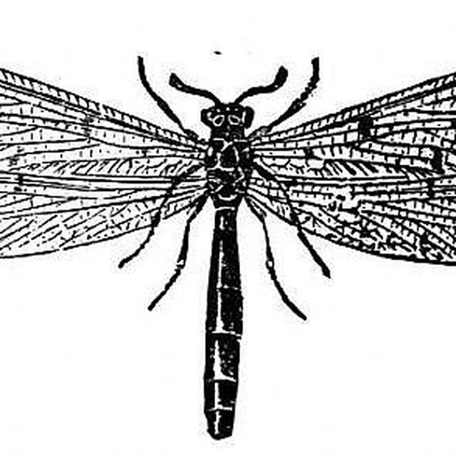 Make Termite Spray to Kill Termites