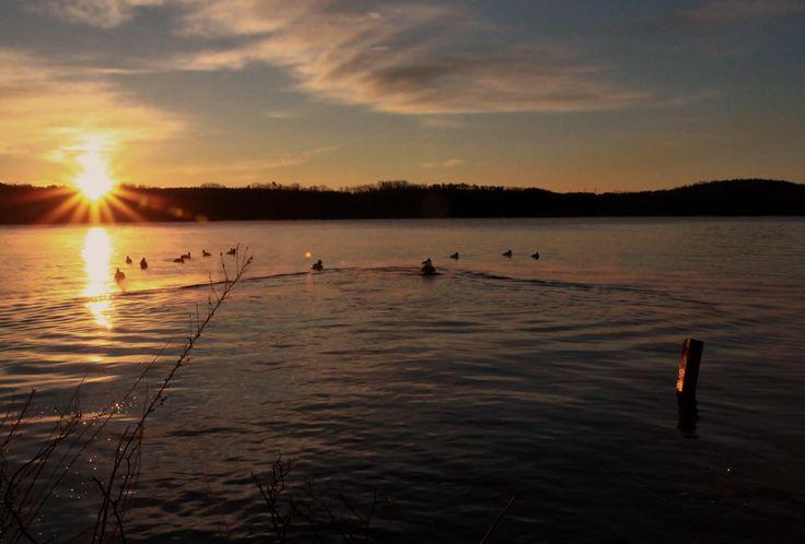 Hoss on retrieve with a beautiful sunrise!