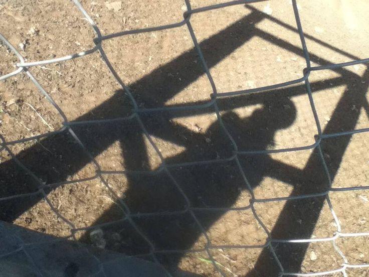 girl be hide it all shadow art by MaxAna X