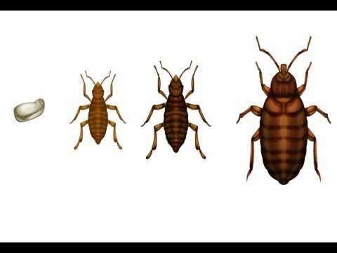 Hope I never need this! How to Kill Bed Bugs - YouTube