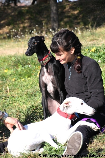 I Heart Whippets Facebook 1000+ images about I l...