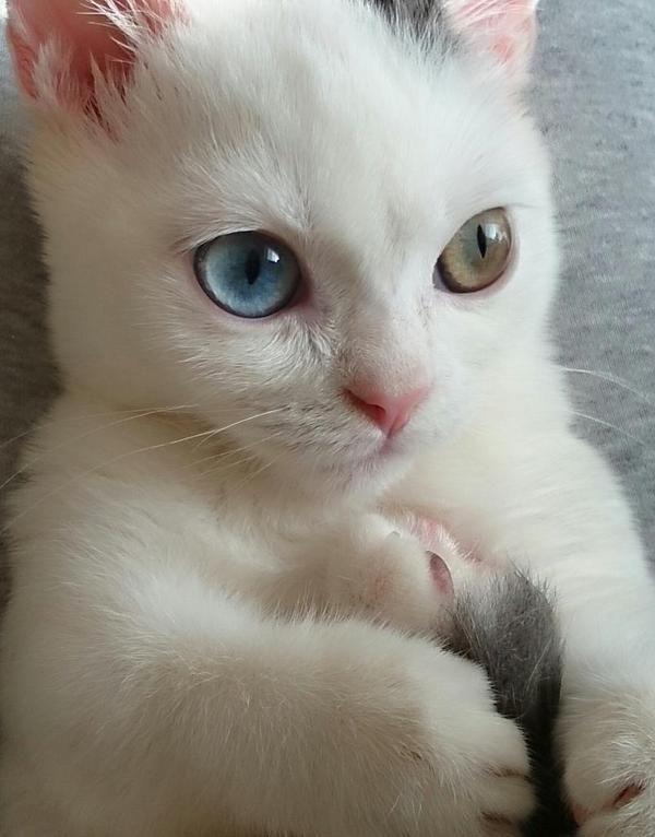 cute kitten awww...