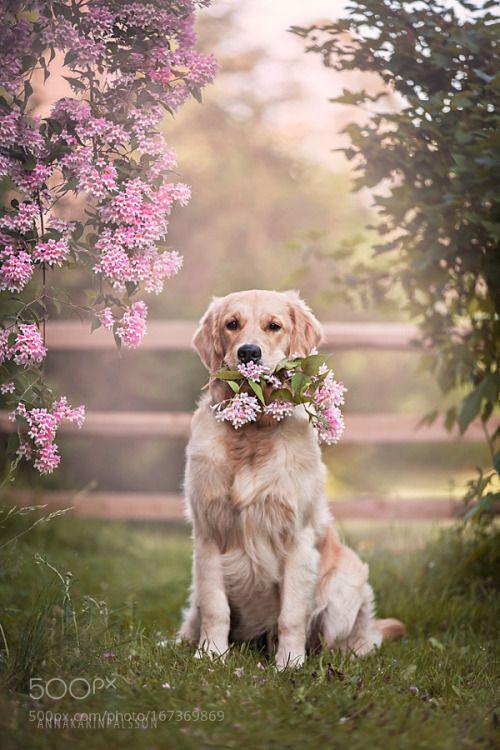 """superbnature: """" Flowers to you by AnnaKarinPlsson http://ift.tt/2b9Am6G """""""