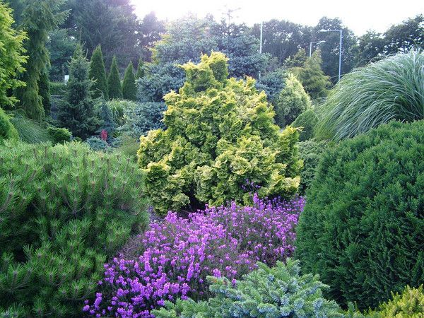 Conifer Garden Ideas saveemail jay sifford garden design Find This Pin And More On Front Yard Conifer Ideas