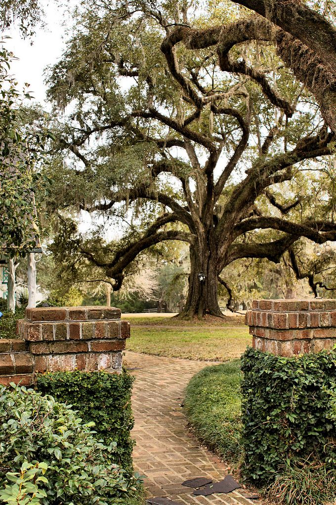 Medway Plantation located in Goose Creek, SC. Photo attributed to Brandon Coffey.
