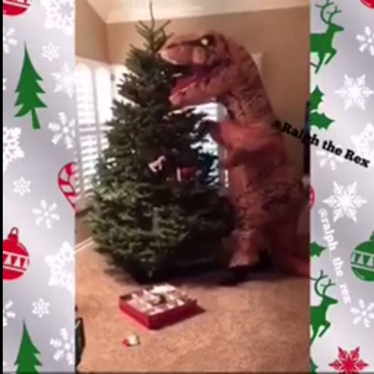 Ralph the Rex with T-Rex Problems: The Christmas Tree   https://youtu.be/0OokYwqhb8M  Contact us at 585-482-8780 for more information or check out select costumes and accessories on our Amazon page or website www.arlenescostumes.com including T-Rex Inflatable Costumes from our friends at @rubiescostumeco  #trex #jurassicworld #inflatablecostume #inflatable #rubies #familyreunion #corporate #fundraiser #graduationparties #ralphtherex #christmas #christmasparty