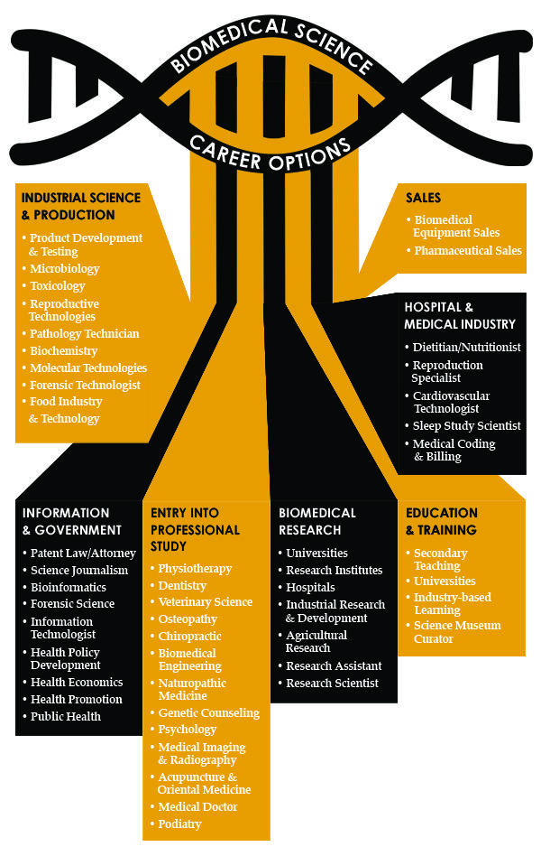 Infographic about careers available to you with a biomedical science degree