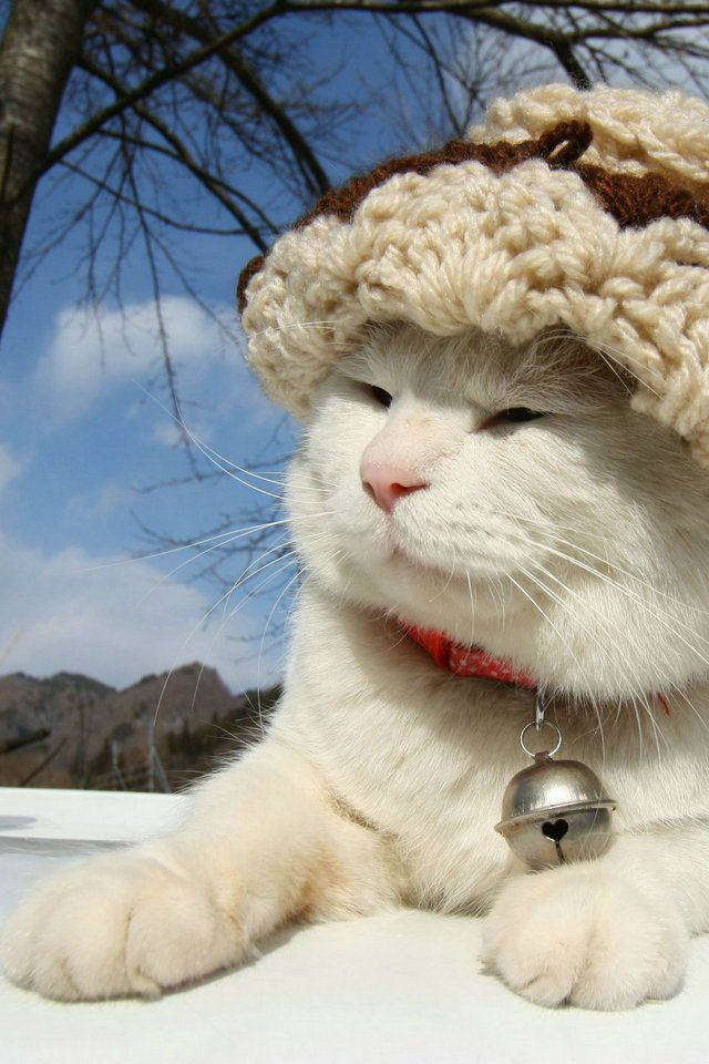 Shironeko in one of his many fashionable hats