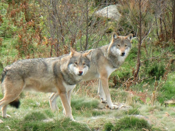 Langedrag Wildlife Park - Nore og Uvdal Municipality, Norway