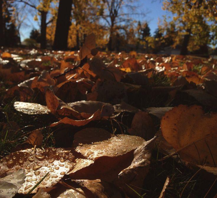 Autumnal Photo Walk by Rachael Read Creamsicle Sky