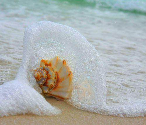 Sea foam #beach