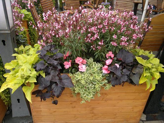 Oto Kilka Ciekawych Propozycji Kompozycji Z Roslin Balkonowych Posadzonych W Roznych Pojemnikach Kwiatowe Kompozycje Plants Little Garden Container Gardening
