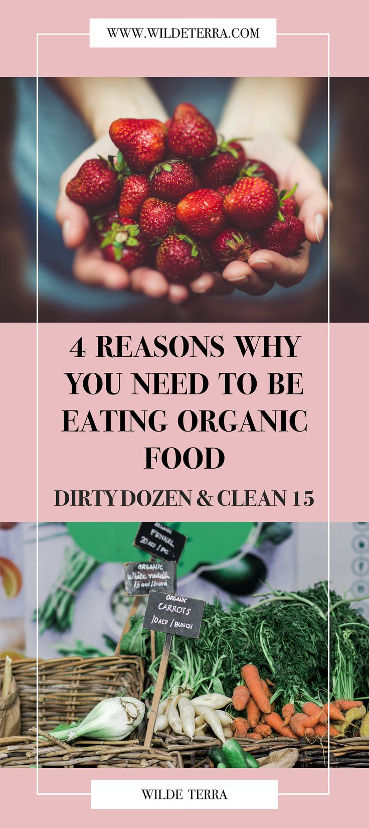 4 REASONS YOU NEED TO START EATING ORGANIC FOOD & DIRTY DOZEN, CLEAN 15 TIPS // healthy living, healthy eating, organic food, organic fruit and vegetables, organic eating for beginners, eating organic and clean, clean 15 dirty dozen, why organic food, why organic is better, healthy eating motivation // WILDE TERRA