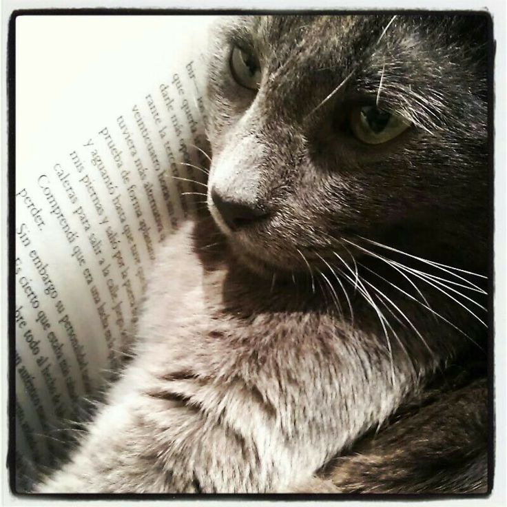 My little cat! #cats #love #gatos