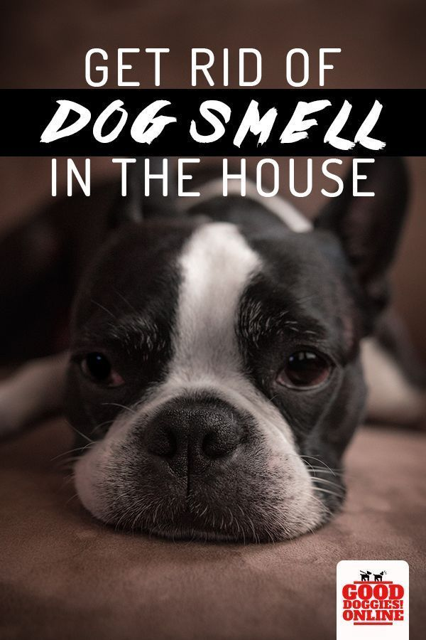 If Your House Or Apartment Is Starting To Smell More Like A Kennel Than A Home Check Out These Tips On How To Get Rid Of Dog Dog Smells Dog Pee