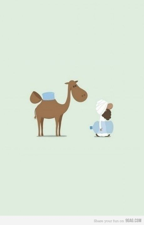 How camels work.
