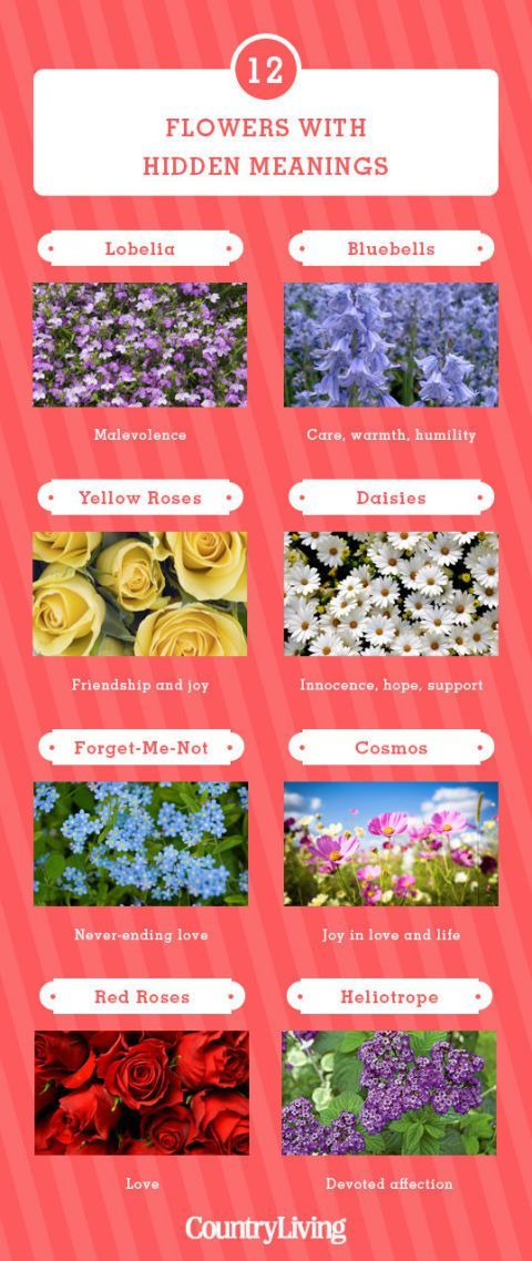 12 Flowers With Hidden Meanings Flower meanings, Cheap