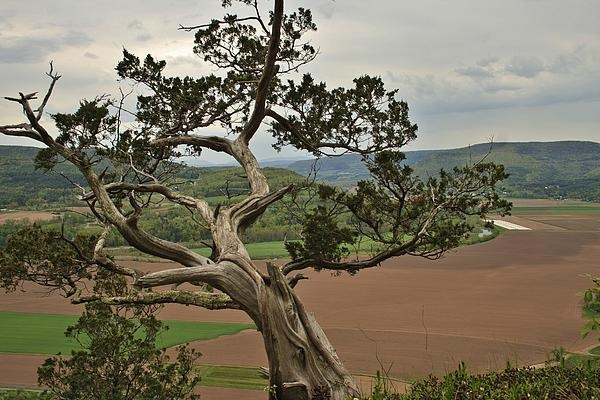 This is a 150-year-old tree that grows out of the side of Vroman's Nose over the Schoharie Valley in New York. Striking image of a lone tree defying the elements to last all these years.