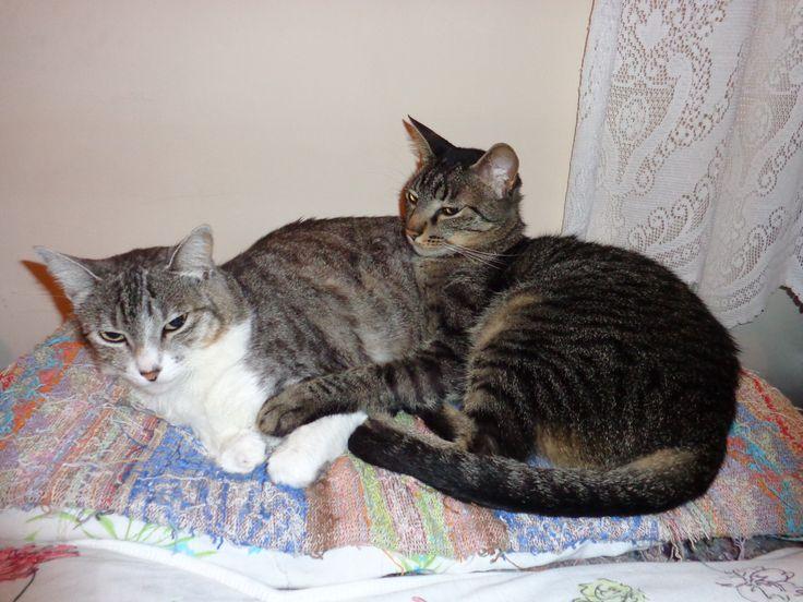Nina e Félix.