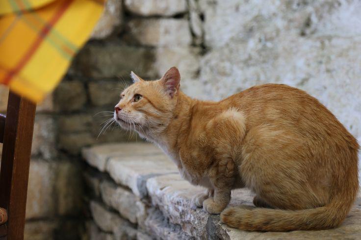 Απείρανθος, Aperanthos, cats