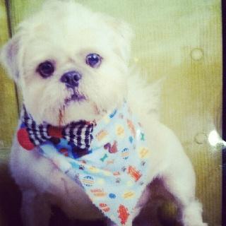 My lil Pug-Zu is the cutest!