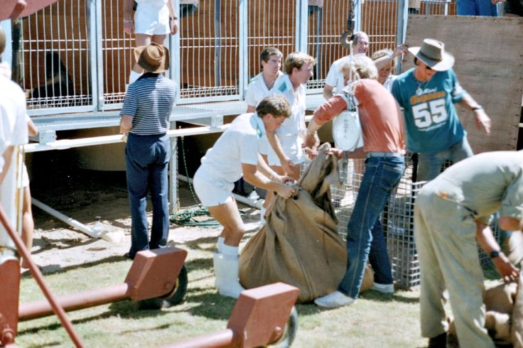 New seal lions arrive 1986