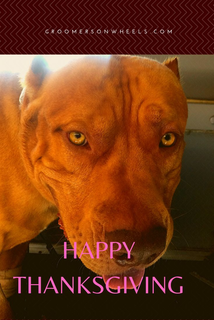 Happy Thanksgiving Pet spa, Puppy grooming, Mobile pet