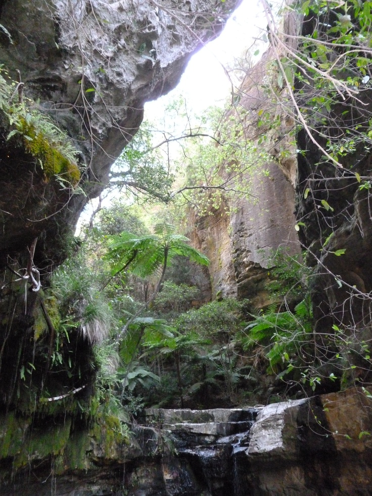 Carnarvon Gorge Queensland (and yes I took this one)