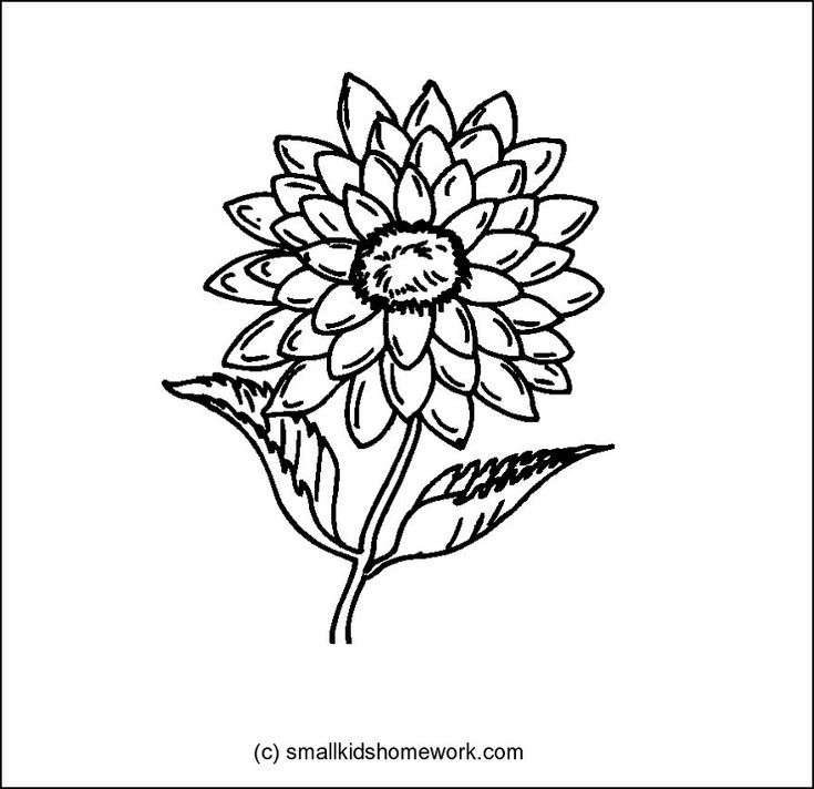 Dahlia Outline Picture Outline