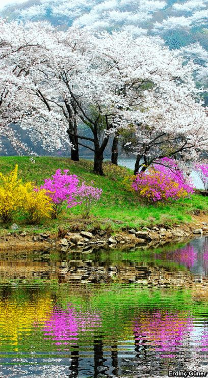 Lovely flowers and flowering tree!