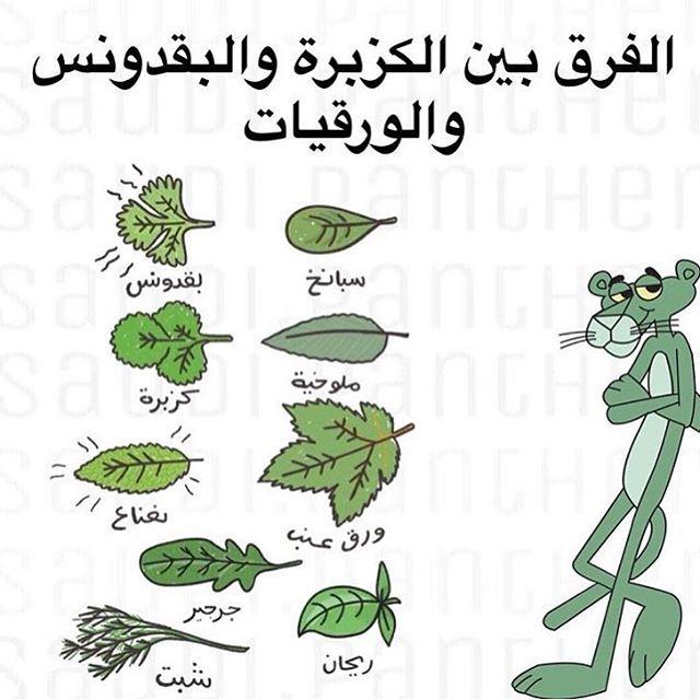 Pin By منوعات مفيدة On معلومات Food Wallpaper Egyptian Food Useful Life Hacks