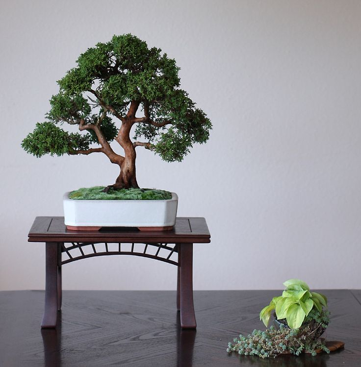 Exhibition Stand Tree : Best bonsai stands images on pinterest log