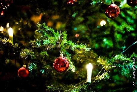 Christmas Trees Photos Free