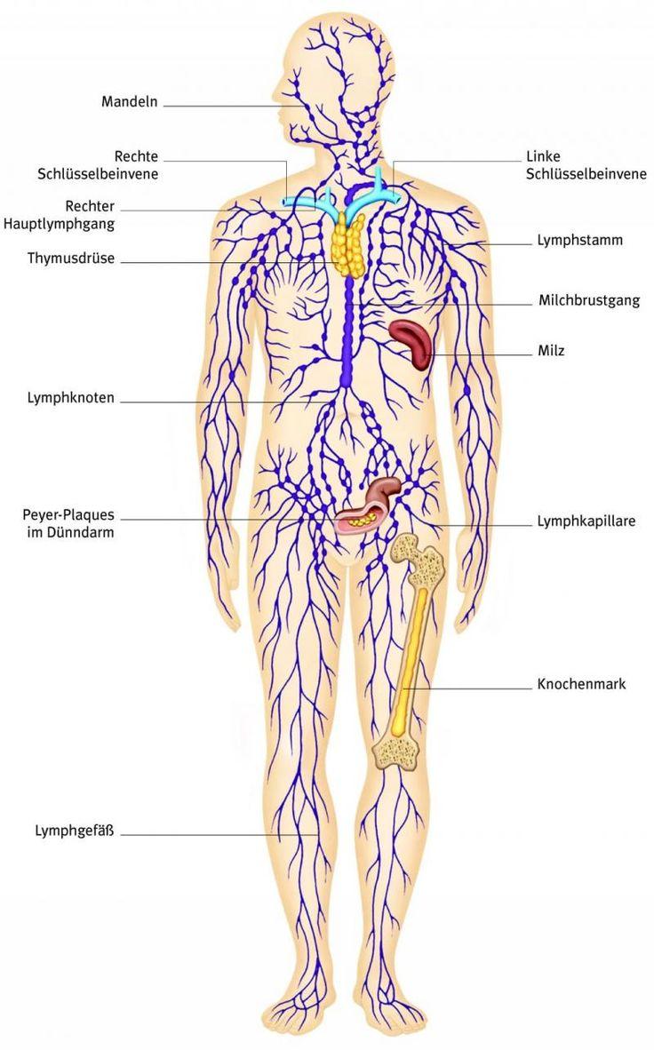 Ganzheitliche Reinigung des Lymphsystems: Wichtiger Teil der Entgiftung - ☼ ✿ ☺ Informationen und Inspirationen für ein Bewusstes, Veganes und (F)rohes Leben ☺ ✿ ☼