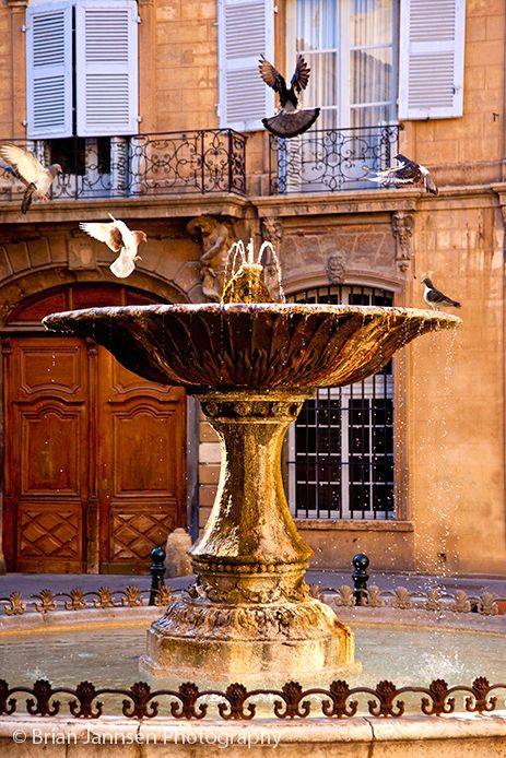 Pigeons playing in fountain in Aix en-Provence France