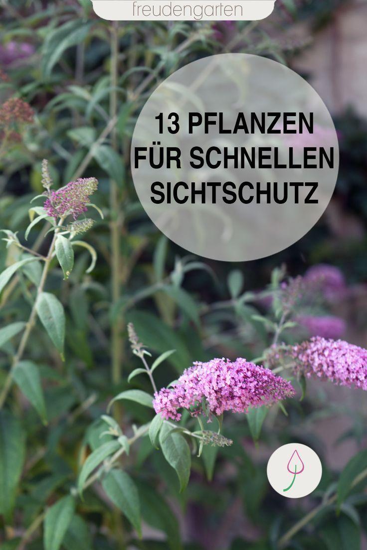 Schnell wachsende Pflanzen als Sichtschutz   Schnell wachsende ...