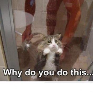 c118151af78cc5dd55f4918a6ddc1ffb sad kitty sad cat 77 best funny images on pinterest ha ha, funny stuff and so funny