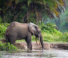Wildlife in Congo – Sightings   Wilderness Safaris