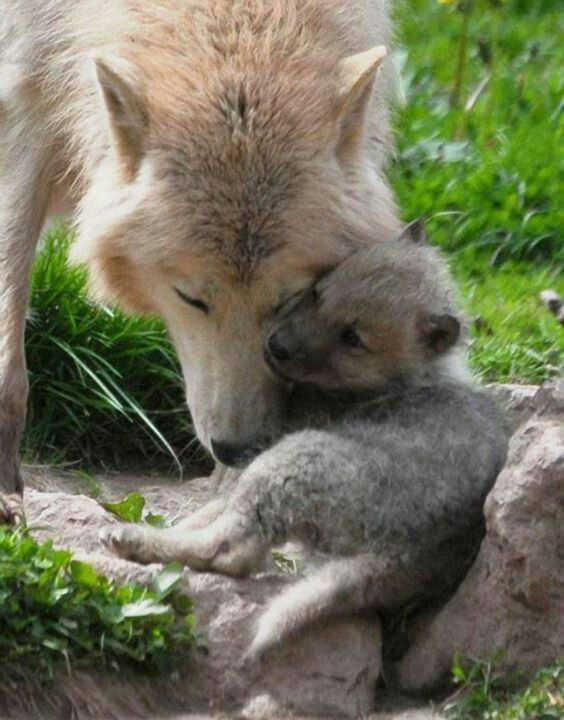 1385 best Animal Moms and Kids images on Pinterest | Wild ...